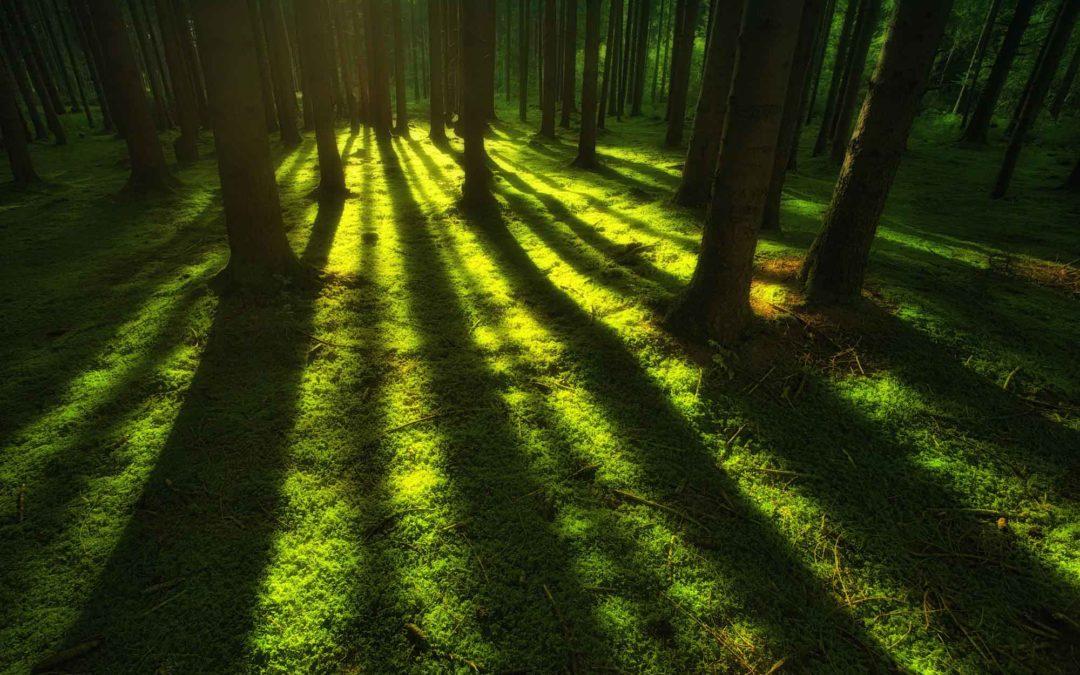 Die wissenschaftlichen Grundlagen von Shinrin-Yoku, dem Waldbaden, kommen aus Japan