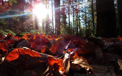Impressionen von einer Waldbaden-Exkursion im Wildbader Forst