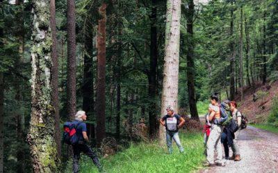Ausbildung zum Waldtherapeuten und Naturcoach im Schwarzwald