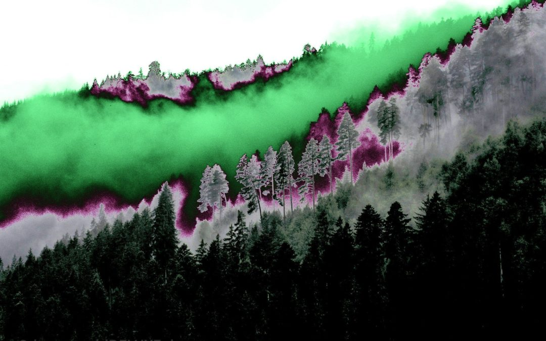 Den Wald einmal mit ganz anderen Augen sehen