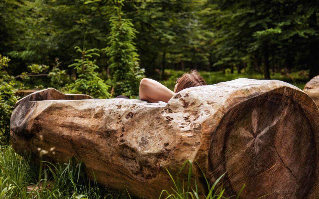 "Waldbadewannen in Bad Wildbad – kann man da ""Waldbaden""?"